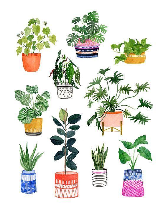 помощью рисунок комнатные растения аксессуара было принято