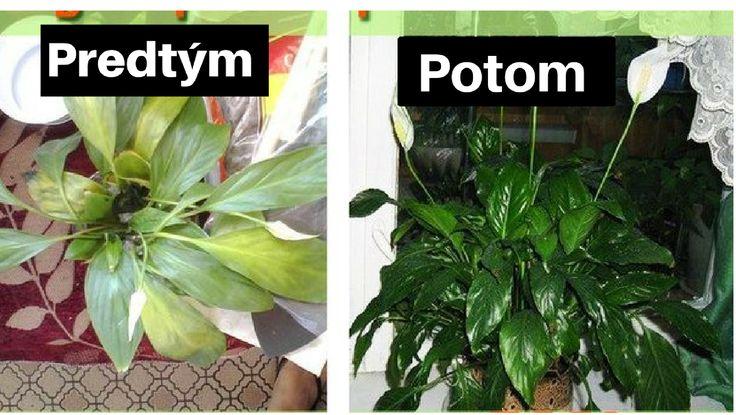 Zomiera vám pred očami vaša rastlinka? Zalejte ich touto zázračnou zmesou a konečne vám zase ožije | Chillin.sk