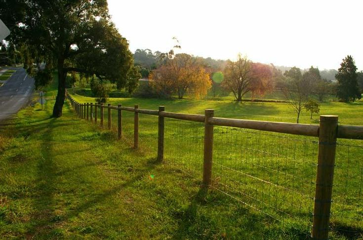 Attractive but economical fencing option for large dog pen.