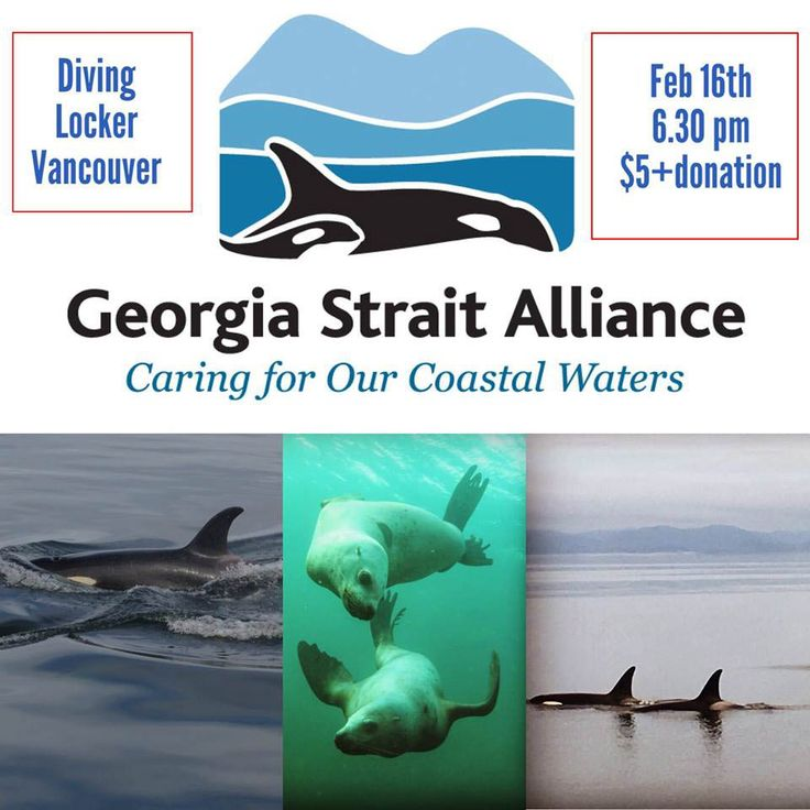Vancouver Diving Locker Presents: Georgia Strait Alliance – Caring for our Coastal Waters