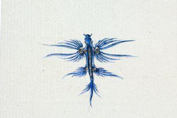 Gasteropode pélagique de haute mer Lesueur, peintre voyageur | Muséum d'histoire naturelle du Havre