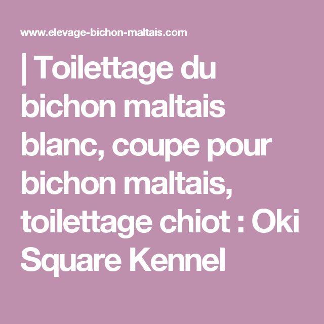 | Toilettage du bichon maltais blanc, coupe pour bichon maltais, toilettage chiot : Oki Square Kennel