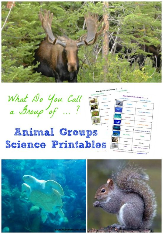 Learn the names of animal groups with this free printable science activity - fun for kids & adults!