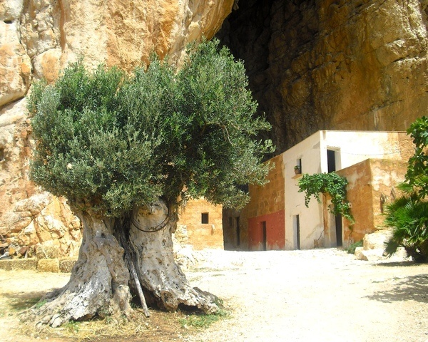Culture in Custonaci, Italy (years old olive tree grotta mangiapane background cave village) - a photo by Emiliano