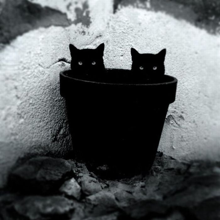 Best Черное Images On Pinterest Beautiful Black White And - This photographer is celebrating stray cats through majestic portrait photographs