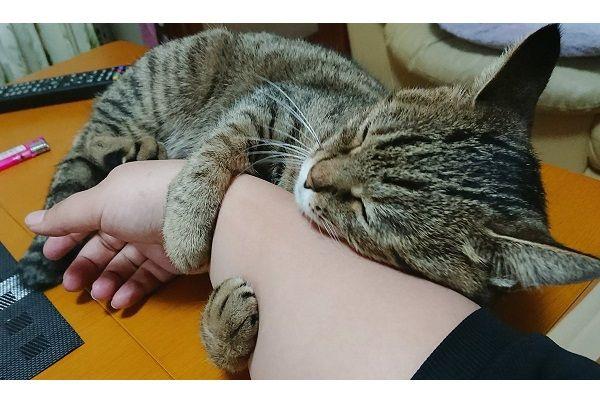 食事中、飼い主の右腕にくっついてきたニャンコが可愛すぎると、Twitterで話題になっています。 チャーハンを食べていたら… この画像を投稿しているのは、美琴(@mkt_gpx7_balius)さん。画像には、美琴さんの腕にしがみつくぶりちゃんの姿が写っています。 チャーハン食べてたら いつの間にか右腕に な
