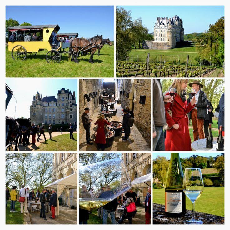 Visite vignoble Anjou pendant Loire Millesime
