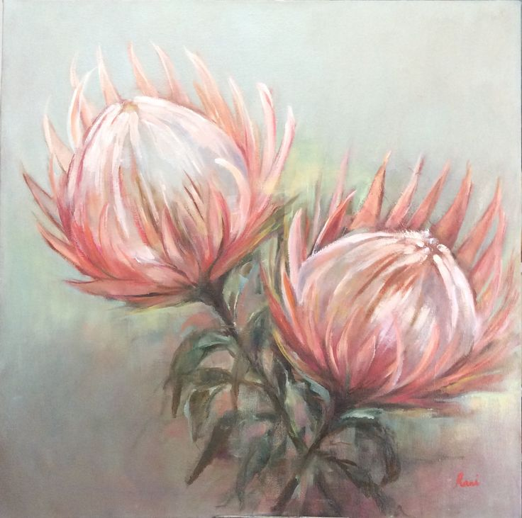 Pink king proteas. Oil on canvas 70x70