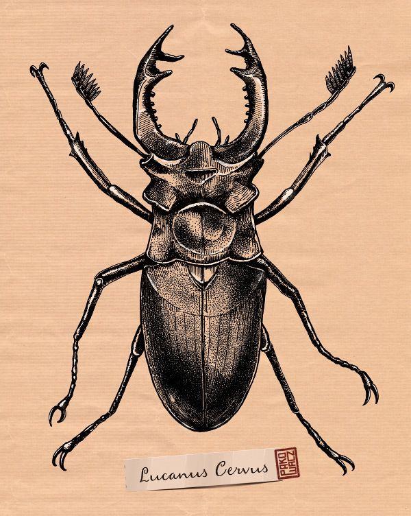 Idéia para Tatuagem de Escaravelho