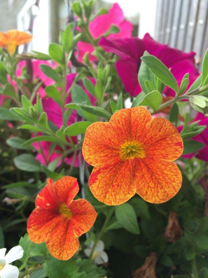 Kildare Post Gardening Column – A Hanging Garden of Colour
