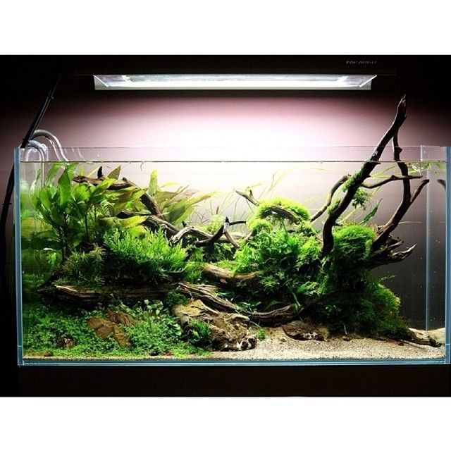 Aquascape Plants For Sale: Planted Aquarium