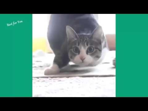 Despacito-Versión Gatos - YouTube