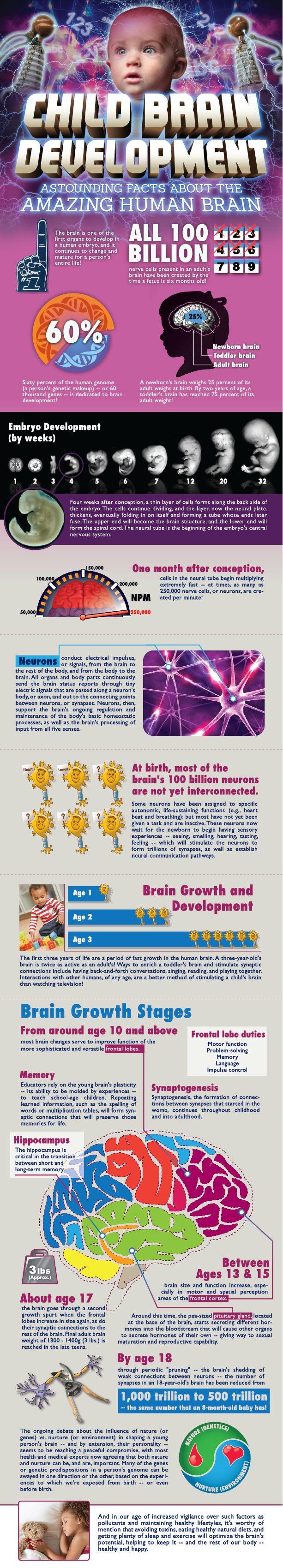 Child brain development #infografia #infographic