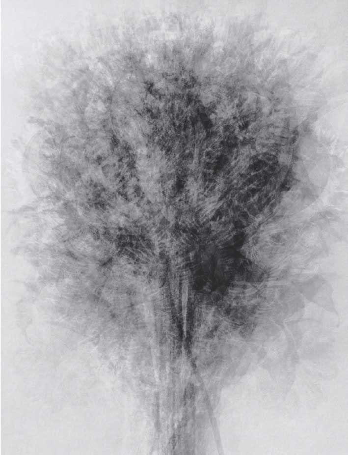 """""""Blossfeldt"""" After... Karl Blossfeldt's Art Forms in Nature   Idris Khan"""