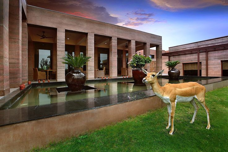 SIREWALLs extend beyond the structure to form fountain walls and borders for lawns and gardens (and uh... wild life)   New Delhi Boutique Hotel – SIREWALL   Structural Insulated Rammed Earth