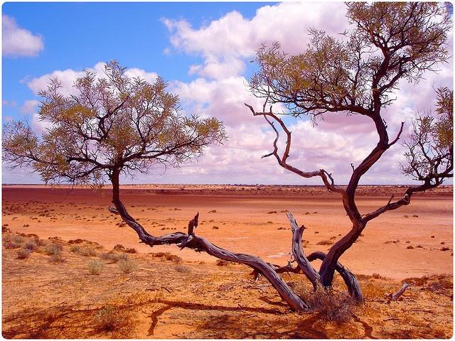 Simpson Desert - Australia