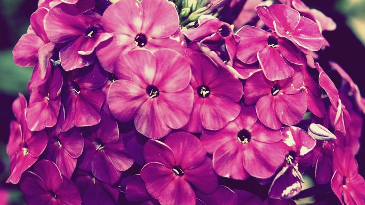Vintage Flower Photography HD Wallpaper