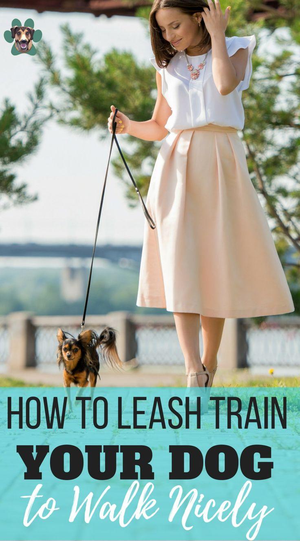 how to teach a dog to walk to heel
