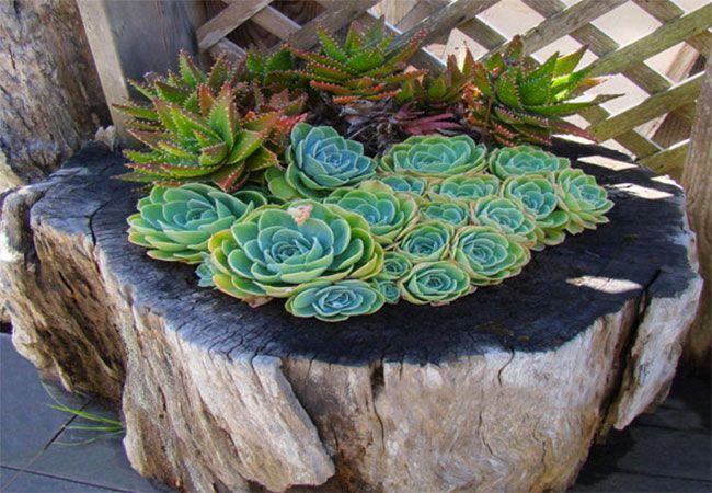 Bruk en trestubbe til blomster og planter