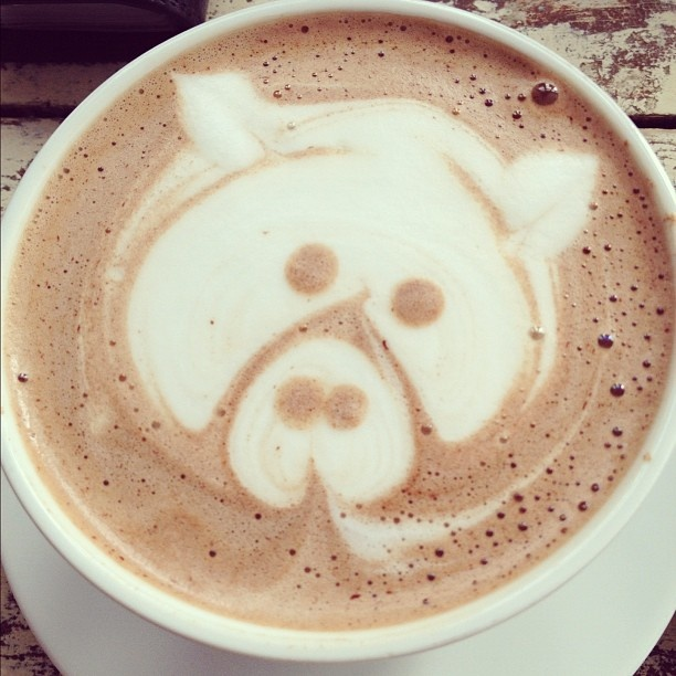 PIGcoffe cream-- too cute to drink