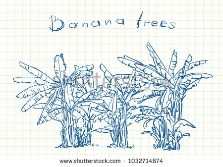 Blue pen sketch on square grid notebook page, Banana tree plantation, Hand drawn vector linear illustration
