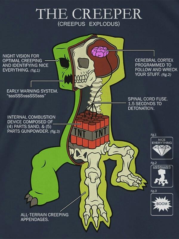 Anatomy of a creeper.