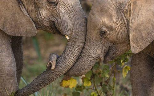 An elephant never forgets!  Image by Daryl Balfour with the Nikon D750 and AF-S NIKKOR 400mm f/2.8E FL ED VR  #IamNewZealand #NikonNZ #Nikon #Nikkor #NZ #NewZealand #Aotearoa #NewZealandGuide #NZmustdo #DestinationNZ #Awesome_Photographers #TravelNZ #TravelingourPlanet #Discover_NewZealand #EarthFever #WorldCaptures #TravelPhotooftheDay #Wow_Planet #BeautifulDestinations #BestNewZealand #KiwiPhotos #NewZealandVacations #OurPlanetDaily #EarthExperience #StarttheAdventure #Kiwi…