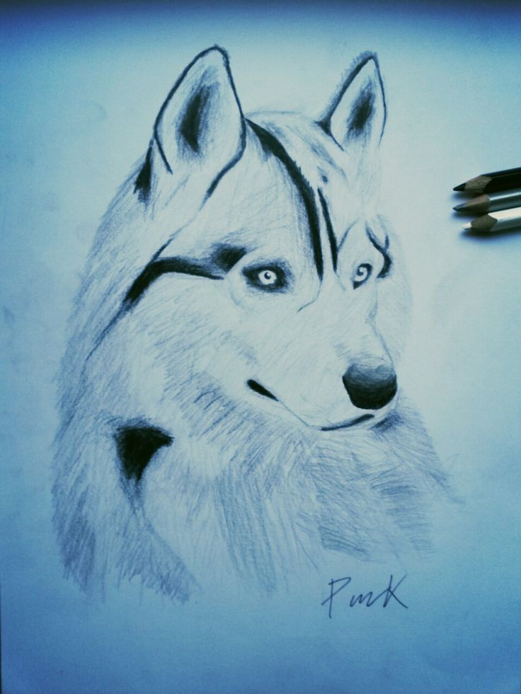I love husky ✏#husky #malamut #dog #i #love #wolves #nature #naturelovers #animal #wild #wildlife #cute #draw #drawing #art #paper #painting #blackandwhite