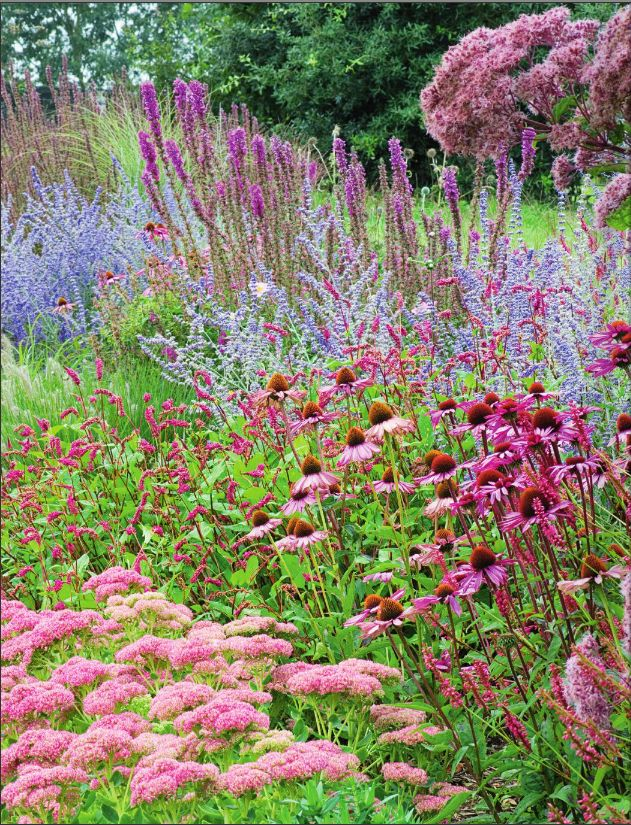 Sedum 'Autumn joy', Echinacea purpurea 'Rubinstern', Persicaria amplexicaulis 'Firetail', Lythrum salicaria Firecandle, Perovskia 'Blue Spire' and Eupatorium purpureaum at Lady Farm, UK.