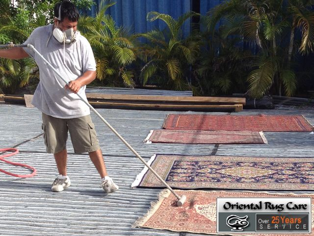 Need to Pet Stain Removal Services in Fort Lauderdale