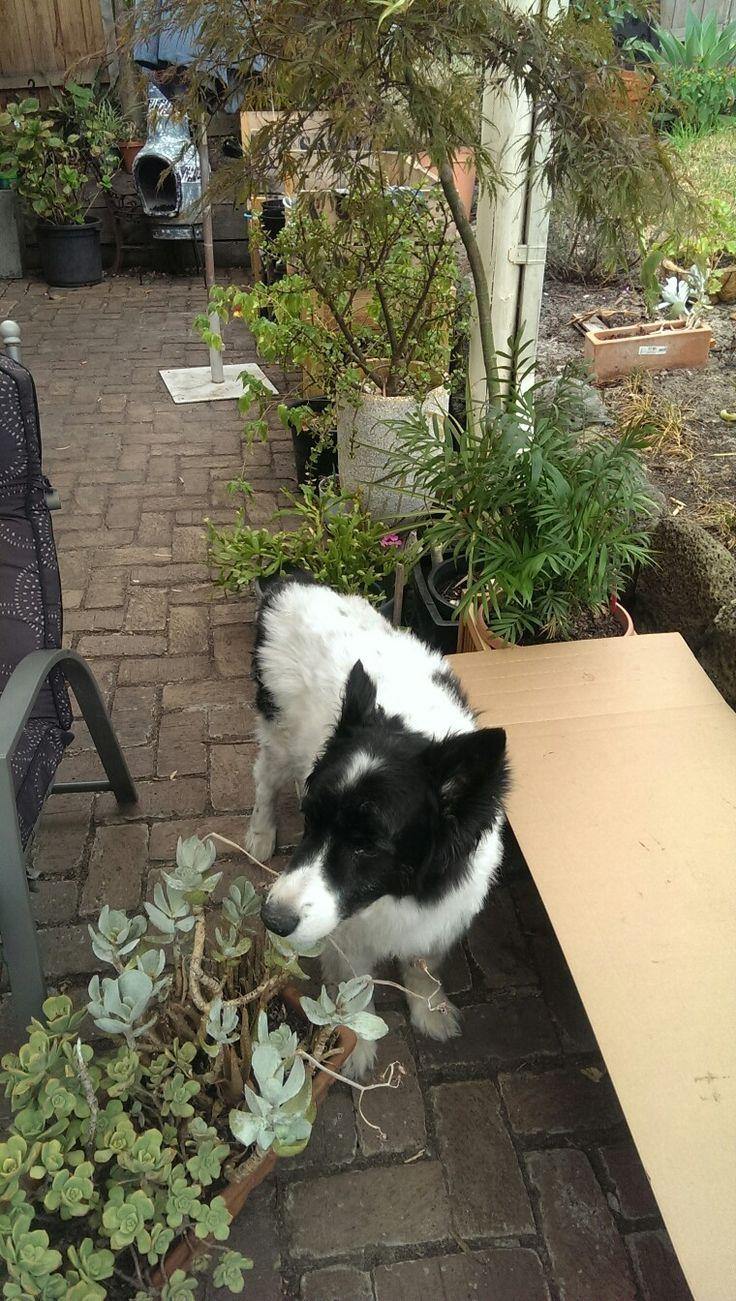 Gardening Assistant, Stewart