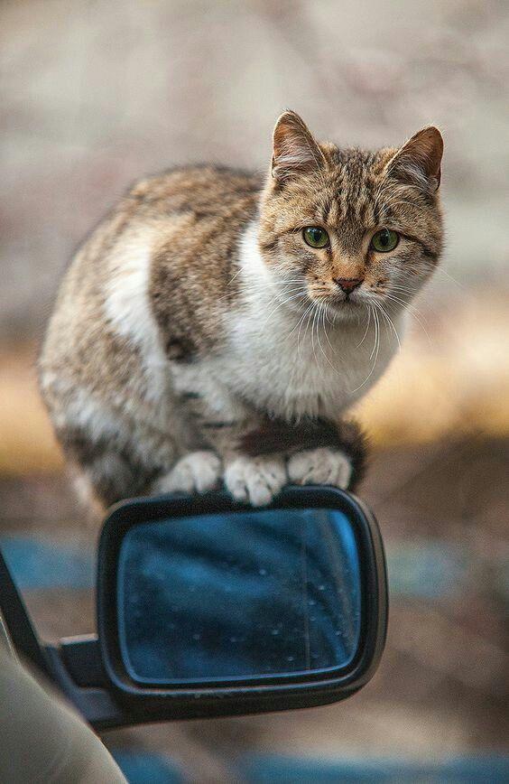 Kitty on Car Mirror ❤