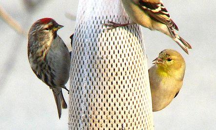 Fun DIY Bird Feeder Ideas