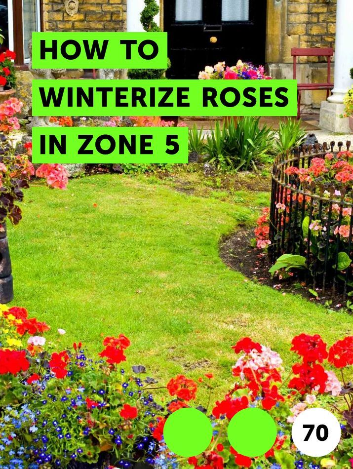 How To Winterize Roses In Zone 5 East Facing Garden Plants
