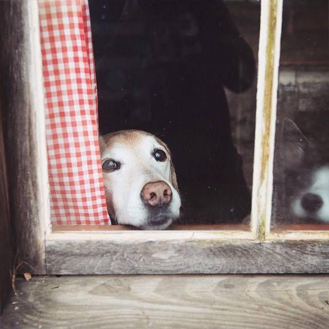 Si hay algo que llevan realmente mal los perros es la separación temporal con sus dueños. Hay quienes ya lloran al ver la puerta cerrarse y hay quienes tardan algo más en manifestar su pena y desesperación, desesperación que se traduce en lloros, ladridos, destrozos en casa, orines por todos lados, copofragia, conductas estereotipadas como …