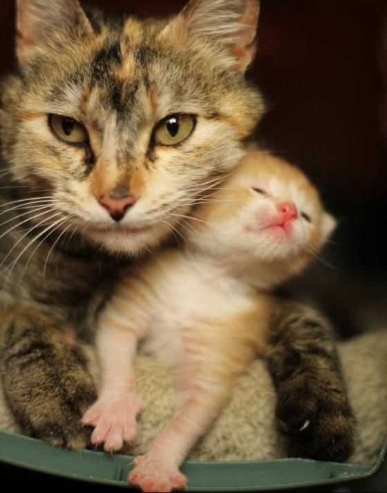 Cute cat mama and her ginger kitten snuggles - anything cuter? Really, anything?