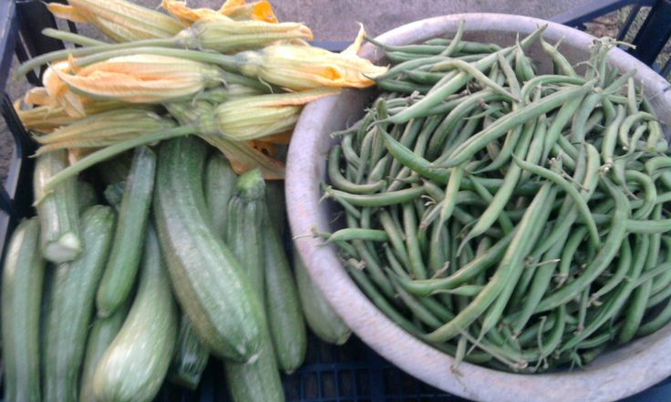 zucchine e fagiolini ottobre 2013