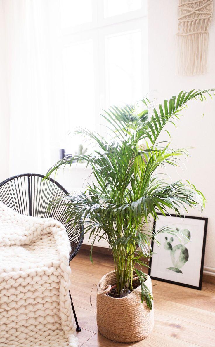 5 pflegeleichte Zimmerpflanzen für euer Zuhause – Einrichtung
