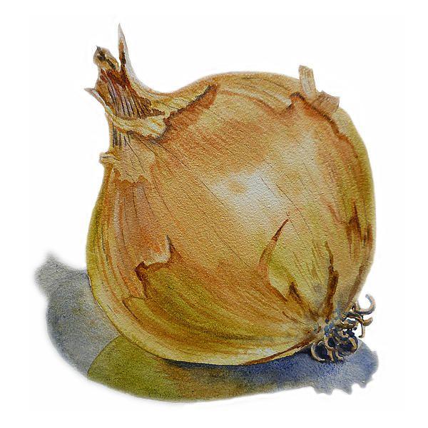 Onion' by Irina Sztukowski - http://licensing.pixels.com/featured/onion-irina-sztukowski.html