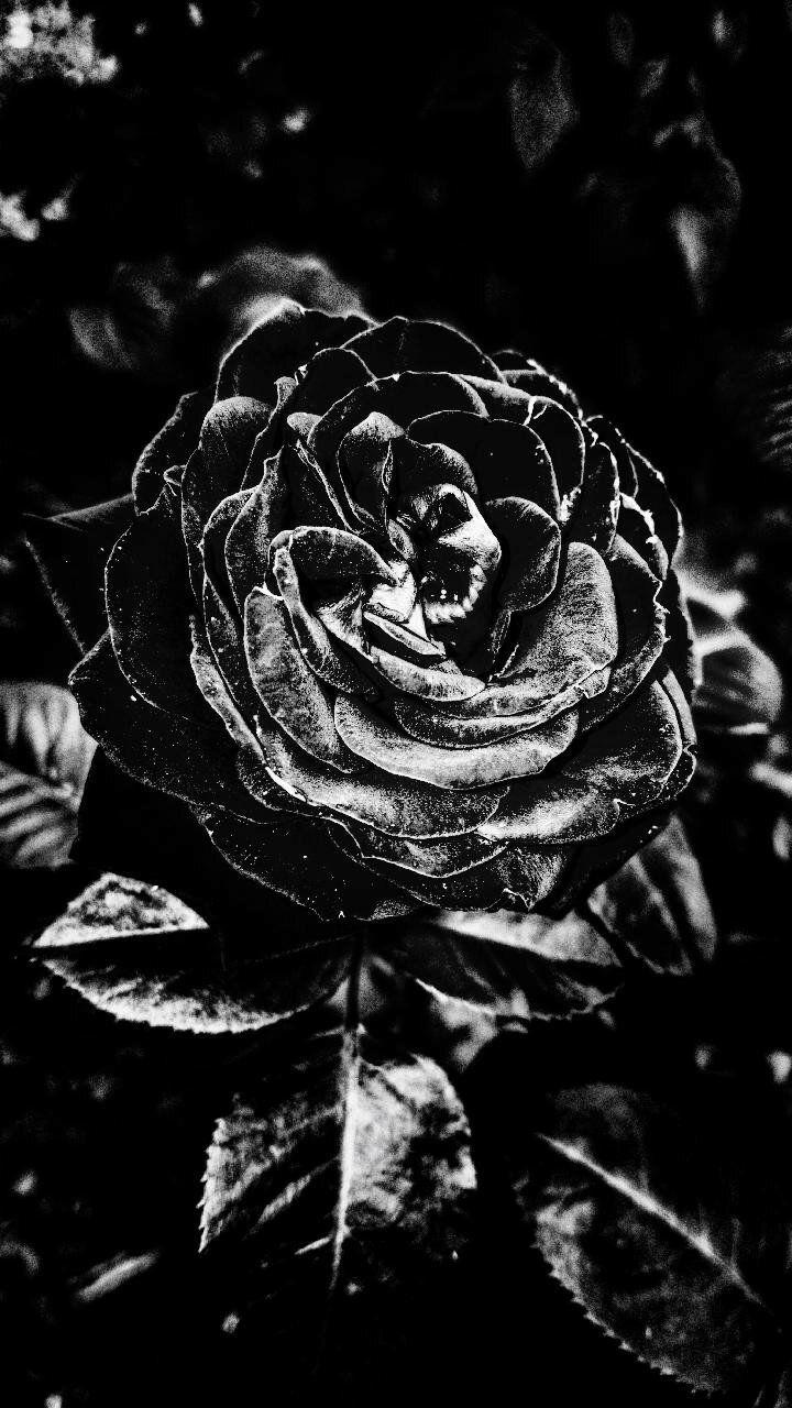خلفيات عالية الوضوح Dark Roses ورود قاتمة سوداء 54 3d Art Art Painting