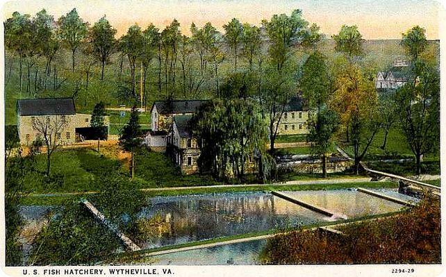 17 best images about wytheville and wythe county virginia for Virginia fish hatchery