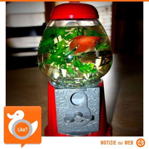 GUMBALL MACHINE FISHBOWL Regala una casa al tuo pesciolino! Questa boule di vetro riproduce in ogni dettaglio i vecchi distributori di caramelle... divertente, colorato e dotato di tutti gli accessori del caso! Naturalmente su Fancy