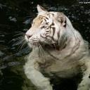 Ecards | World WildlifeFund Apr  2
