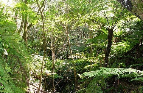 La situación de los ecosistemas de los bosques tropicales es más que alarmante. Un estudio llevado a cabo por el Instituto Carnegie ha determinado que sólo ..