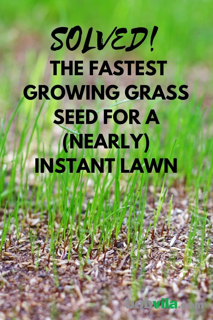 Fast Growing Grass Seed Options Solved Bob Vila In 2020 Growing Grass Grow Grass Fast Grass Seed