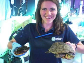 Do you love animals? Do you enjoy nature and being near water? Do you want to know more about our blue planet?  The Office of Teens Programs is the place to start if you want to get involved at the Aquarium. We offer a variety of volunteer and paid opportunities for teens ages 13 through 19. Different programs happen throughout the year and have different application deadlines.