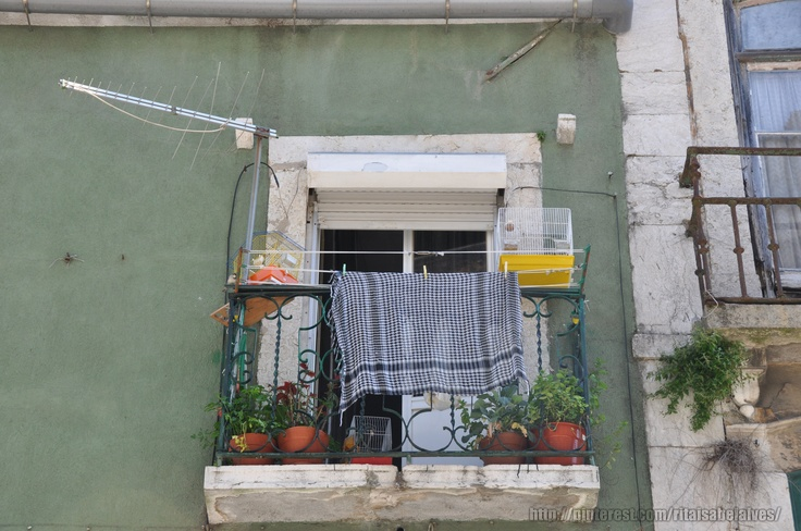 Parakeets, flowers, laundry and TV antennas in a Lisbon window