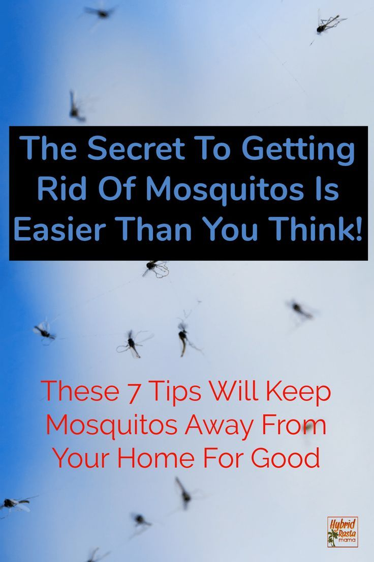 7 Natural Ways To Get Rid Of Mosquitoes | Homestead Skills