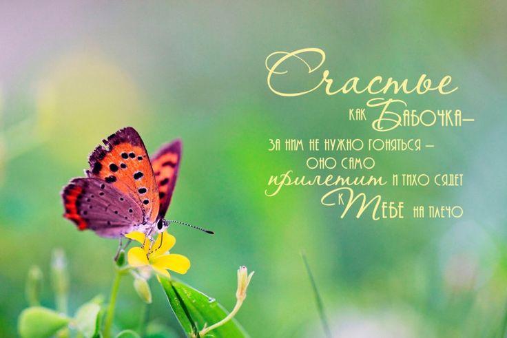 бабочка счастье