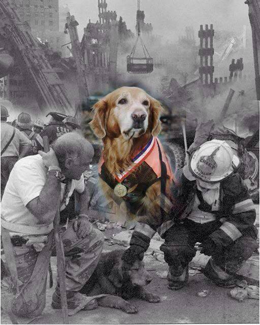 Bear WTC Poster Judith H Block My NYC Parks Enforcement K-9 Bear found both First Fire Commissioner William Feehan and Chief of Dept. FDNY Peter Ganci as well as many victims of the attack on the WTC. There is a memorial to him at FDNY/EMS Academy. https://www.facebook.com/video.php?v=10152250908092964&set=vb.795282963&type=3&theater